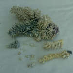 CORAL natural specimen approx 8 inch nice large example #2